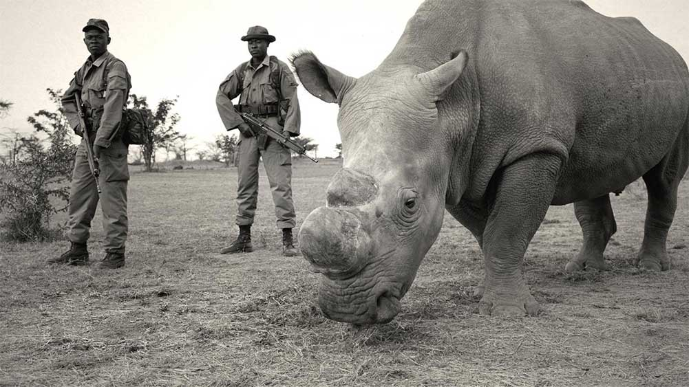 troops and rhinos